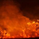 incendios_foresta
